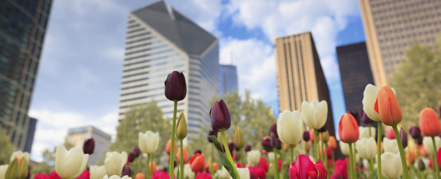 Flowers and city scene